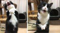 голодный котэ.jpeg